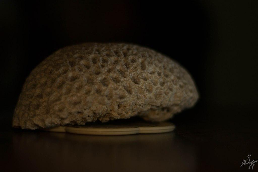 Brain coral, much more detailed due to diffused light