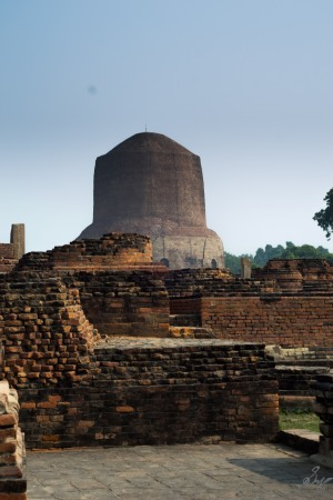 Excavation and Dhamek Stupa