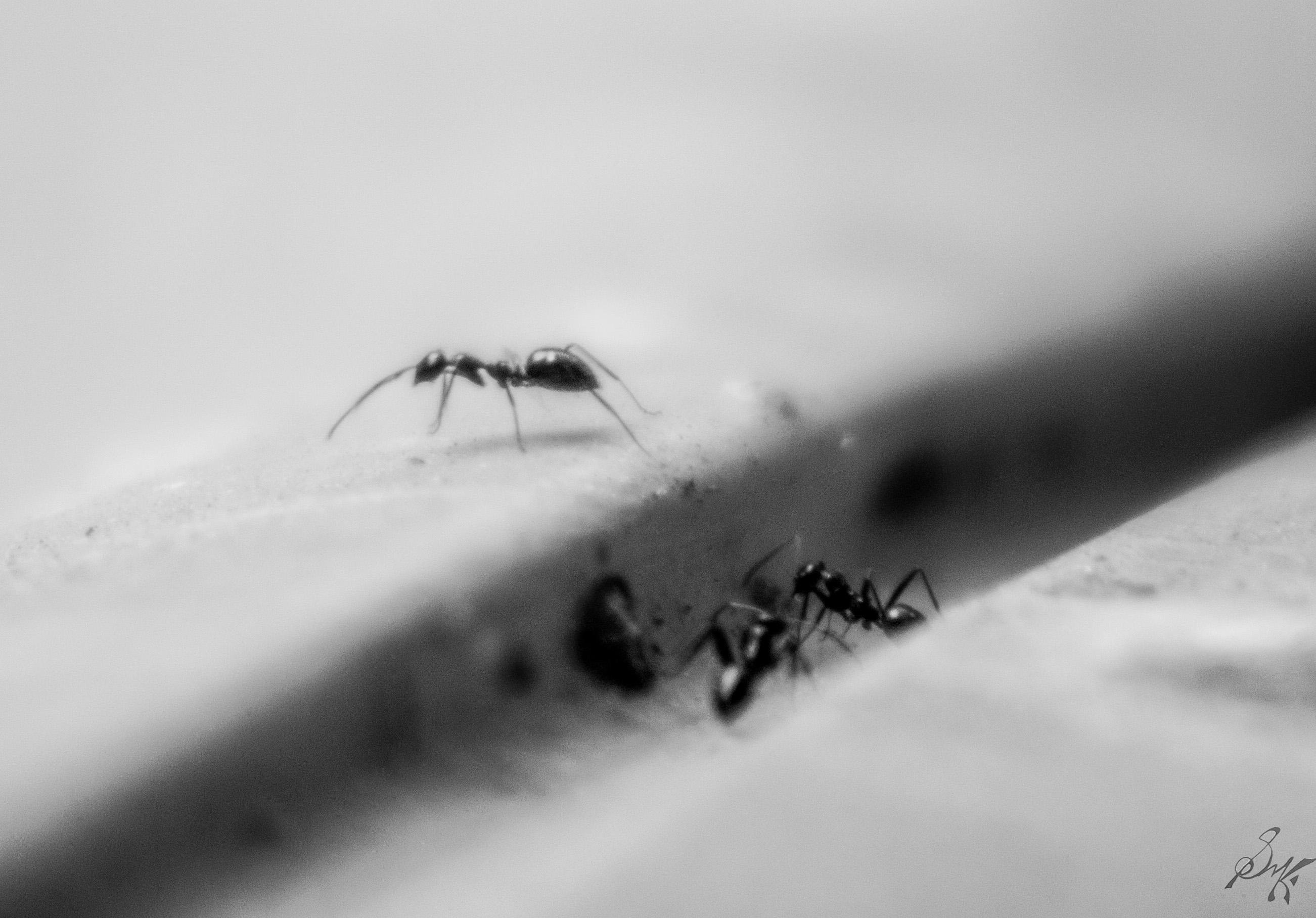 Tiny Black Ants Kitchen Similiar Black And White Tiny Ants Keywords