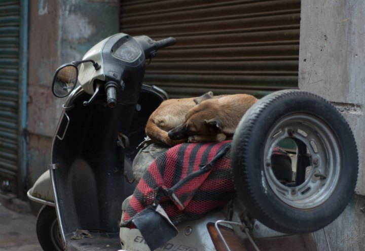 Dog sleeping on a scooter