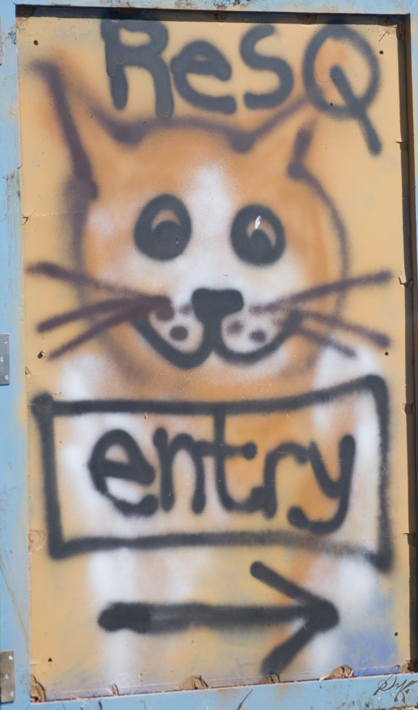 Door to ResQ charitable foundation with a cat spray paint