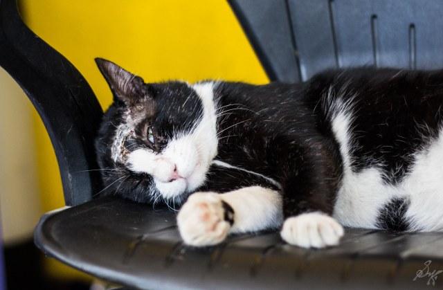 Gizmo, the injured cat lazes