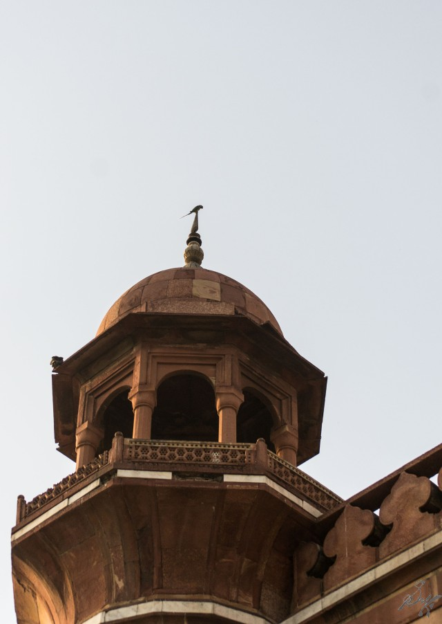 Parrot on one of the minarets, Delhi, India