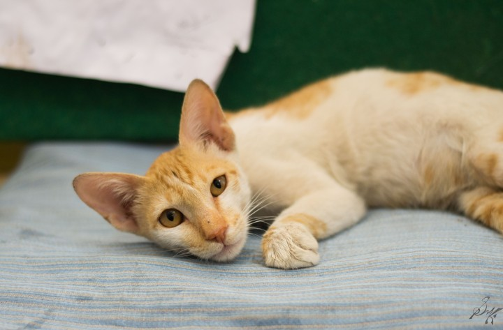 Kitten awake and curious