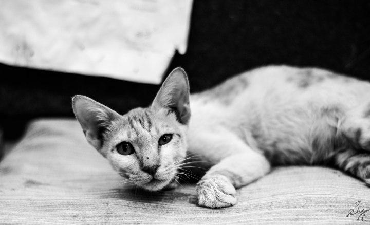Kitten surprised