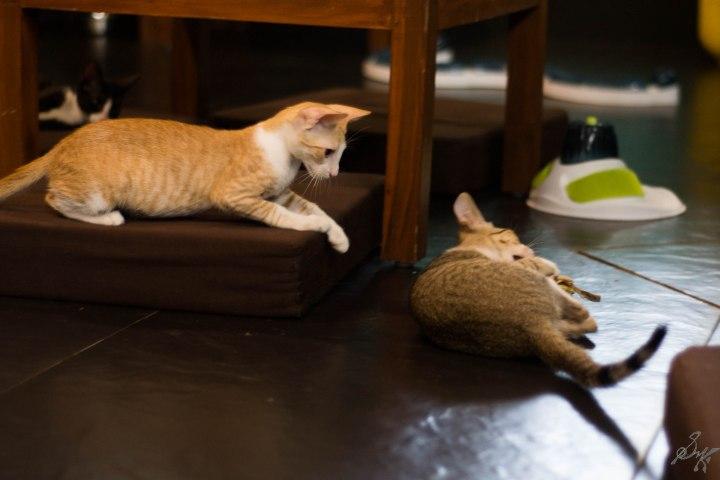 Kitten ready to attack
