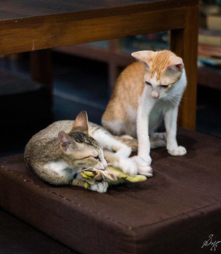 Kittens contemplating truce