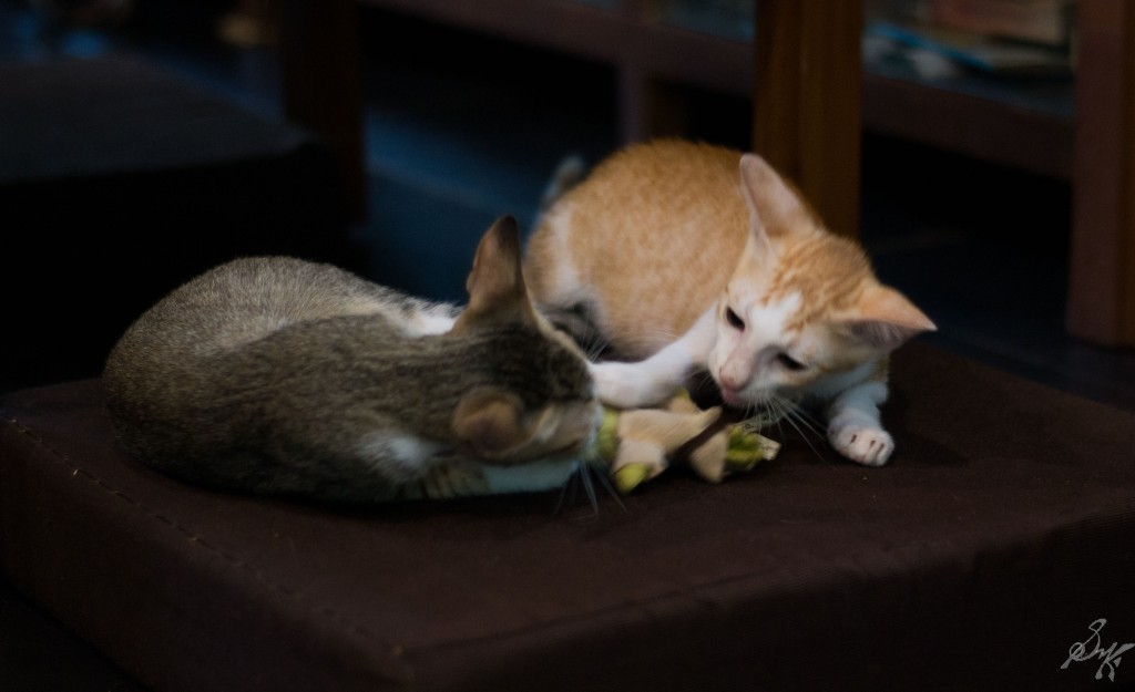 Kittens reconcile