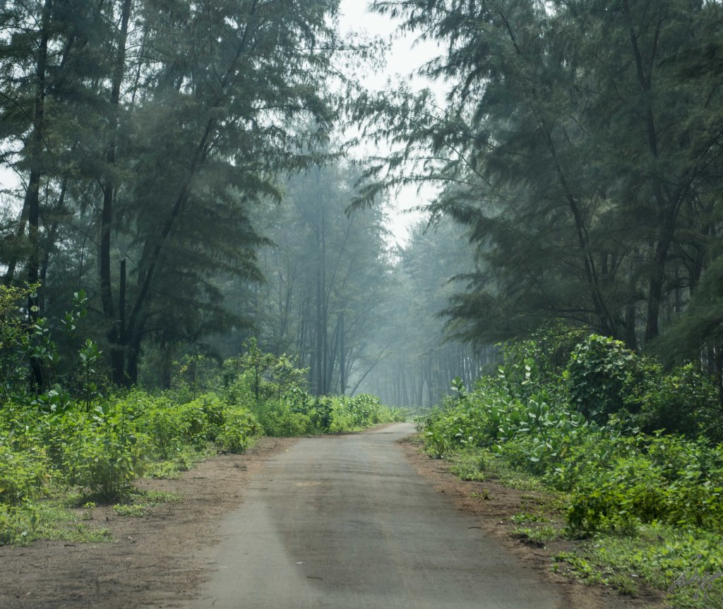 The beach road to Diveagar Beach