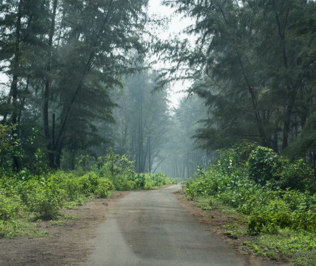 The beach road to Diveagar Beach