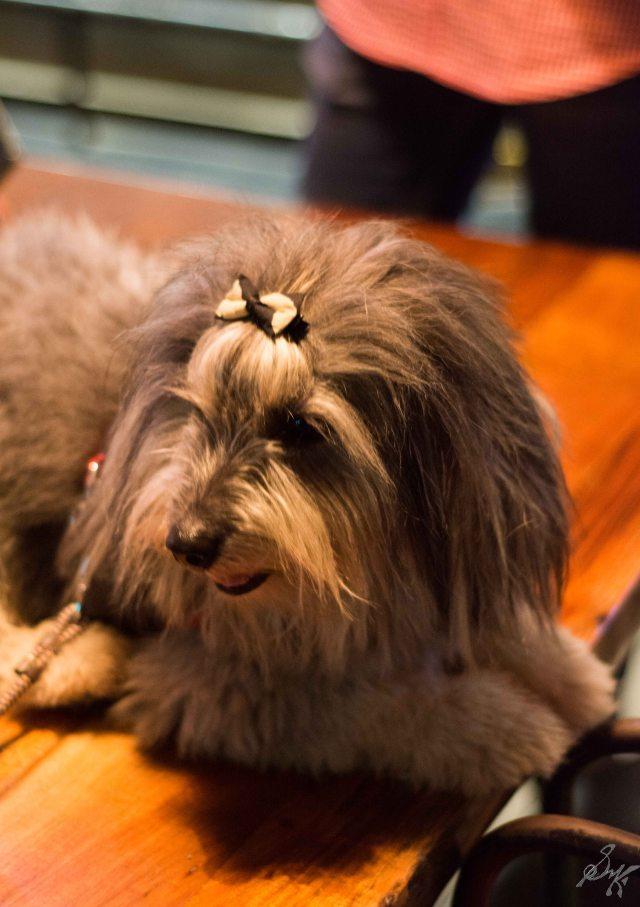 Cute, Fluffy, Dog