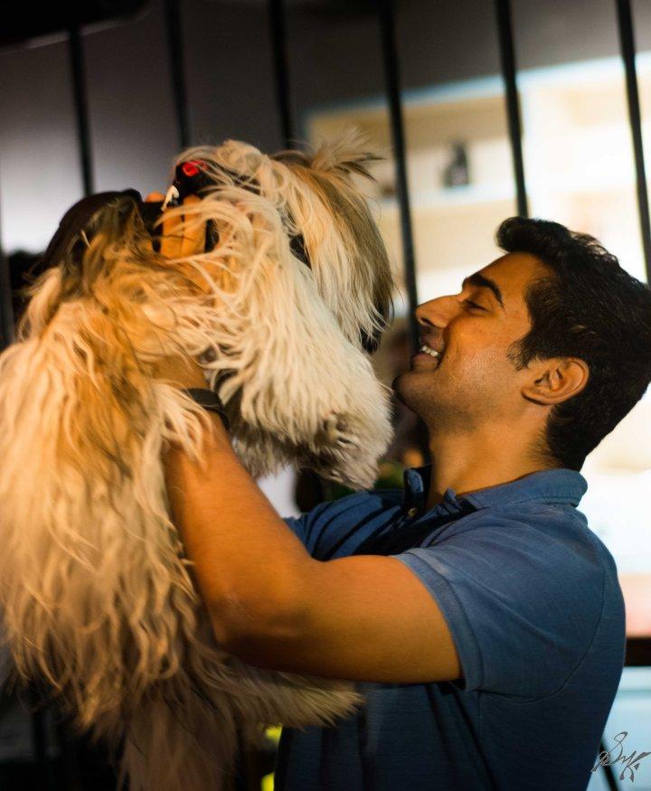 Shi Tzu, Dog, Furry, Cute