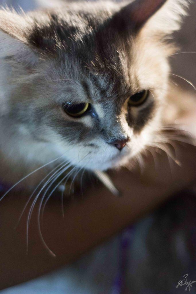Intense looking kitty, Cat