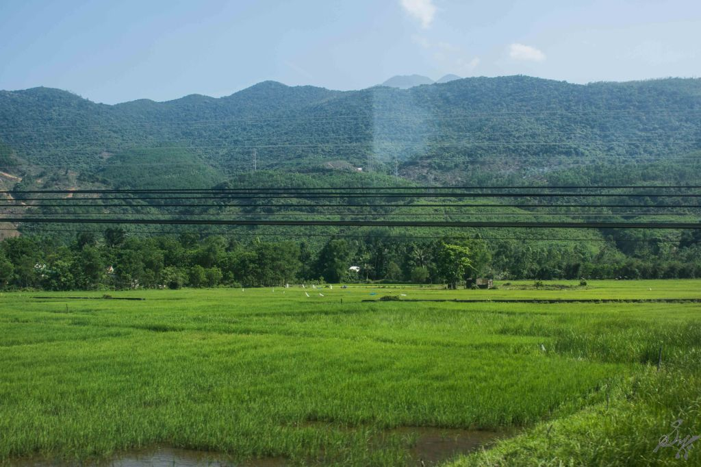 Paddy fields, Vietnam