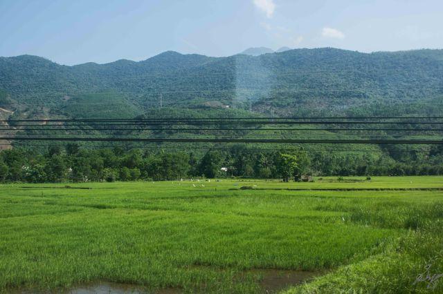 Paddy fields, Vietnam