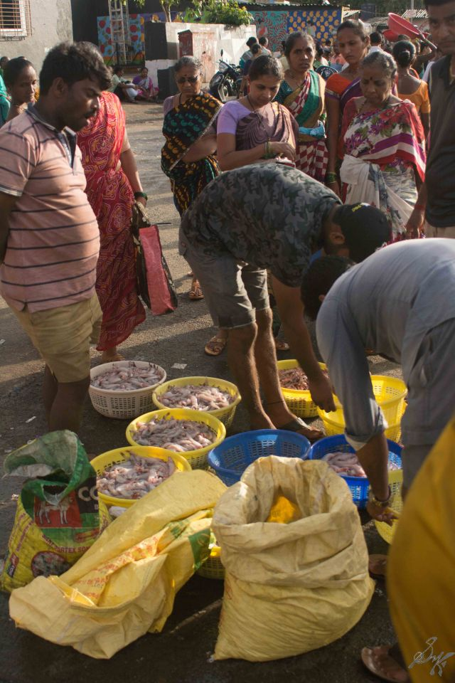 Fishes being readied for auctions, Sassoon Docks, Mumbai, India